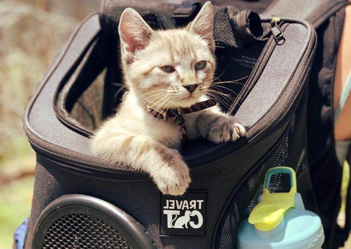 Gato en una mochila de paseo por el campo