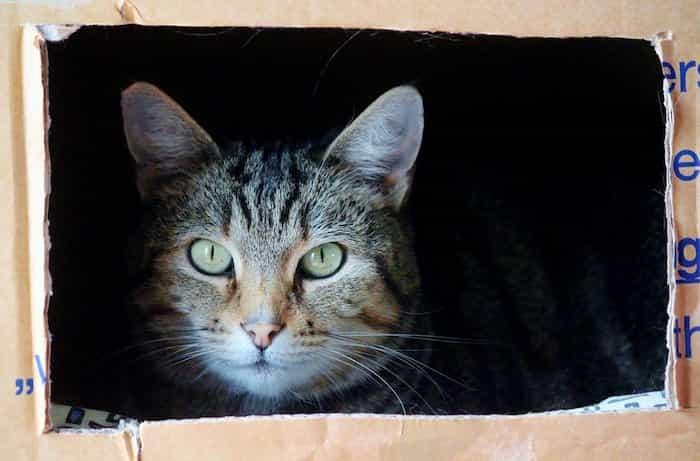 Gato escondido en una caja para la mudanza