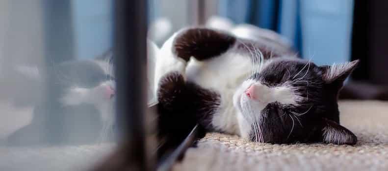Gatito relajado en la ventana de la nueva casa