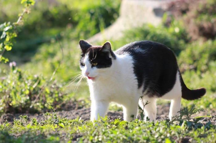 Gato con nombre famoso Felix