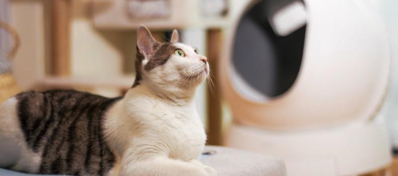 Gato con un arenero autolimpiable robot