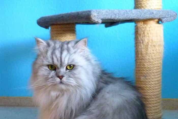 Gato con su rascador casero
