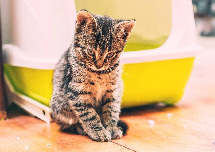 Gatito al lado de su arenero autolimpiable