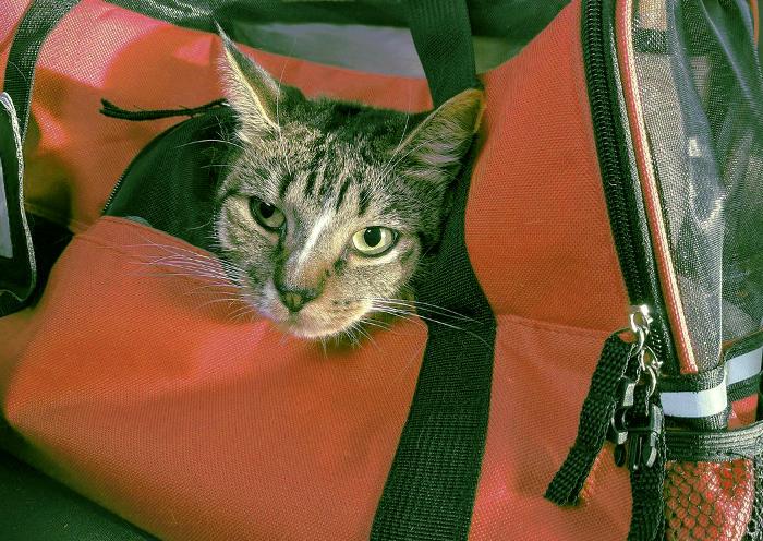 Gato e un transportín para viajar en cabina de un avión