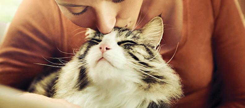 Gato con una persona que no tiene alergia a los gatos