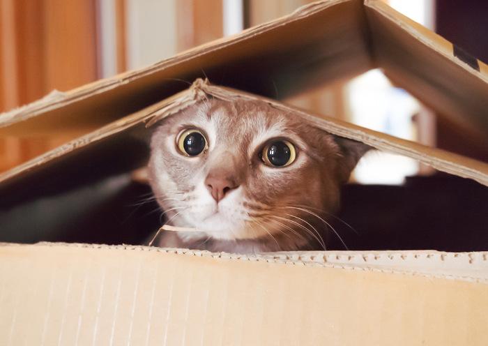 Gato jugando en casa con una caja