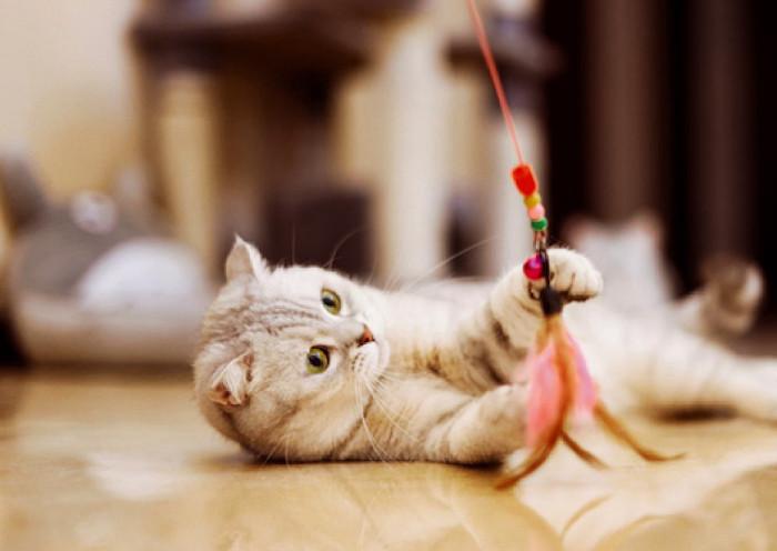 llamando a un gato para jugar