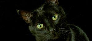 Gato negro con los ojos de color verde