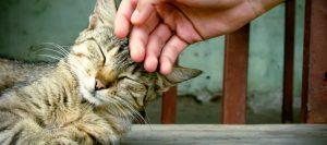 Gato ronroneando porque está muy a gusto