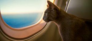 Gato que viaja en avión