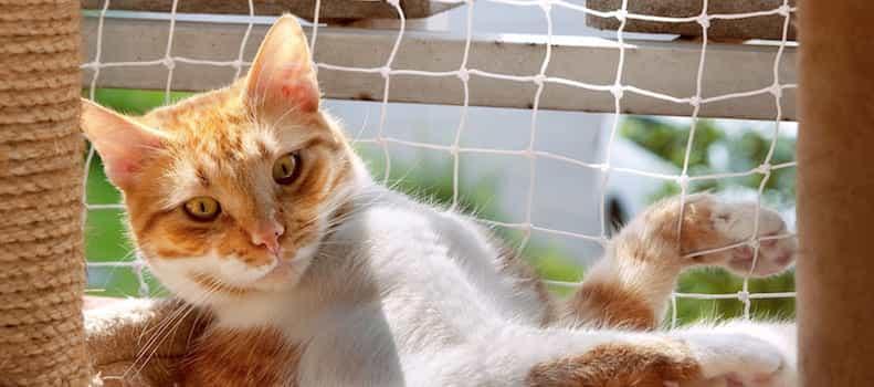 Gato sobre la plataforma de un rascador casero