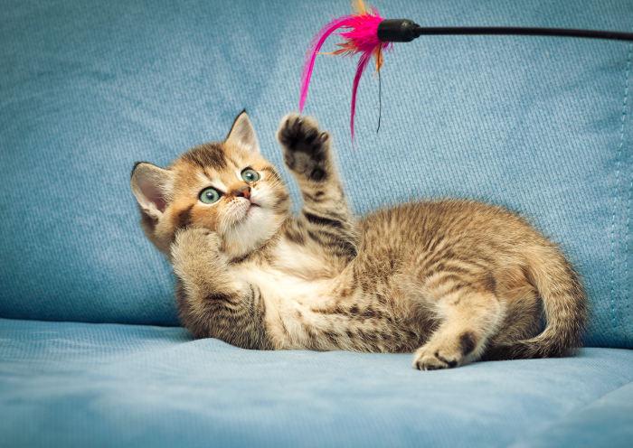 Gatito jugando con su juguete preferido