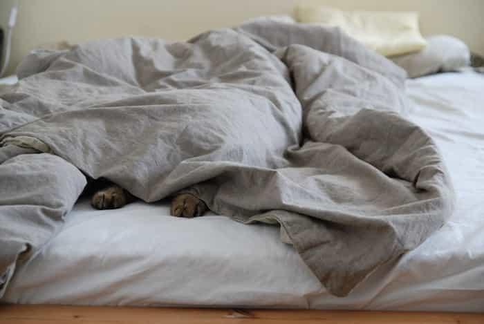 Gato durmiendo en la cama escondido debajo del edredón