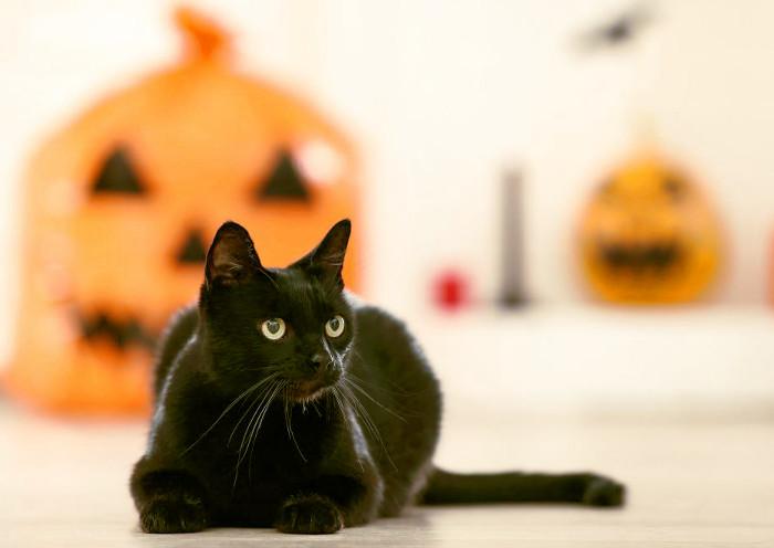 Gatos negros relacionados con mitos y fábulas