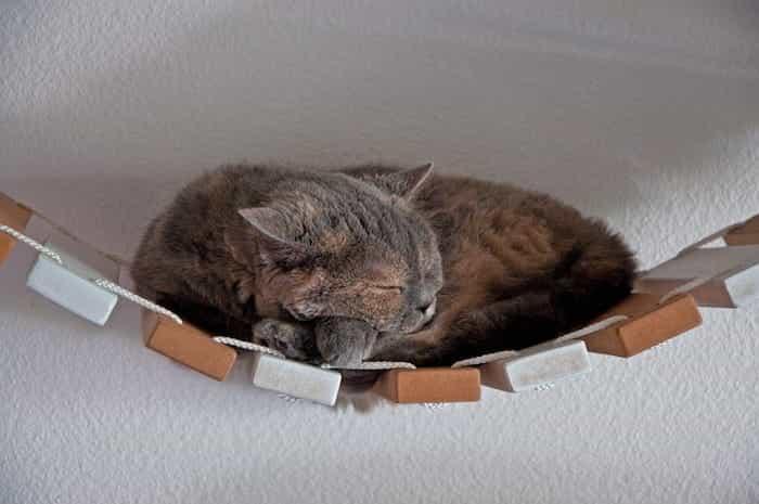 Gato durmiendo en un pasadizo colgante casero