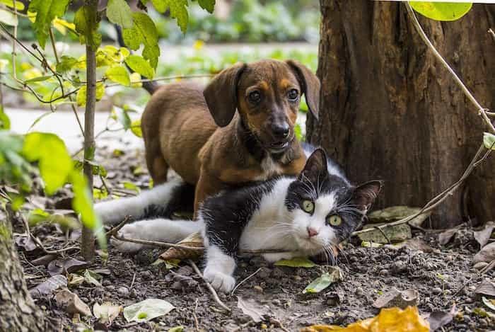 Gato y perro jugando en el jardín