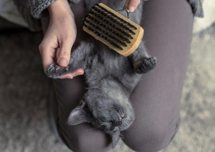 Gatito con caspa y tratándola con un cepillado