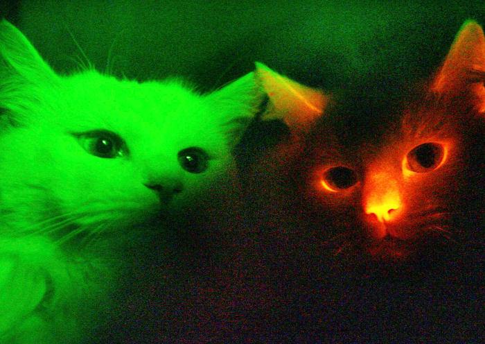 Gatos vistos con los colores que percibe la visión de un gato