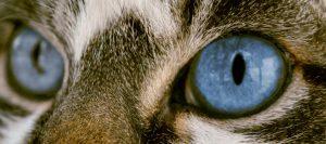 Ojos de un gato viendo su alrededor