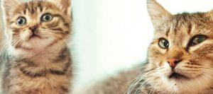 Gatos con diferente edad