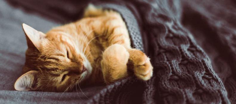 Gato durmiendo porque está enfermo