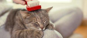 Gato con caspa