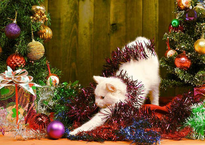 Gato con sus regalos de Navidad