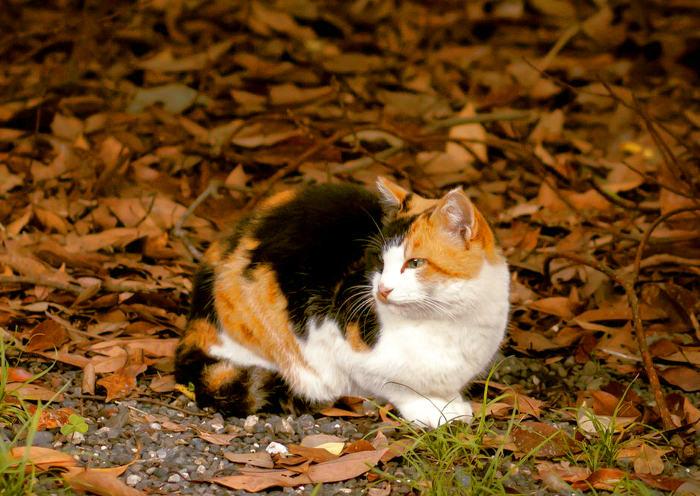 Gato naranja, negro y blanco en el jardín