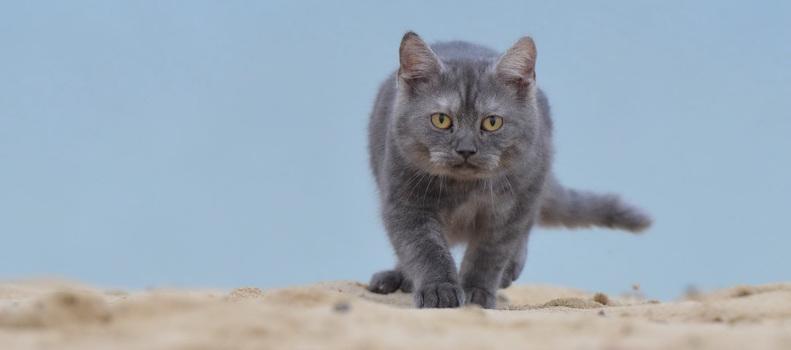 Gato en la mejor arena para gatos