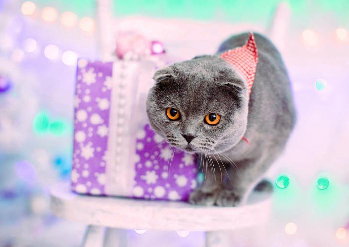 Gato con un regalo para gatitos