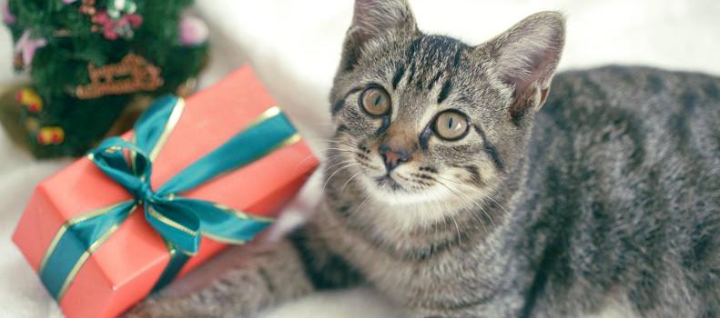 Gato con los mejores regalos