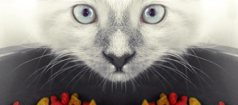 Gato comiendo el mejor pienso senior para gatos