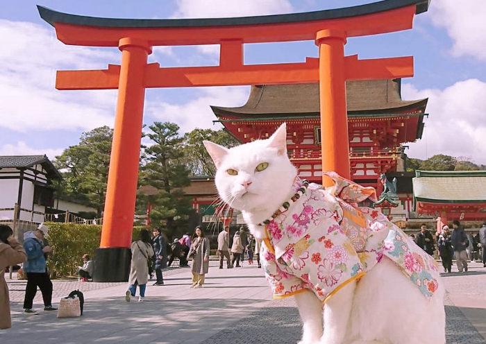 Gato en un templo japonés