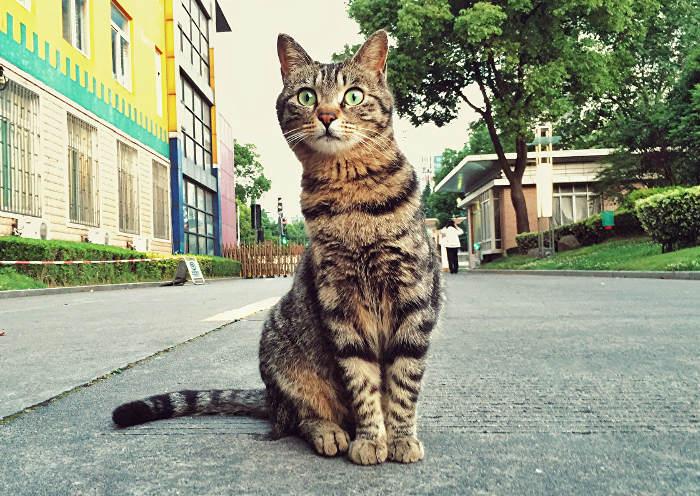 Un gato en la calle con probabilidad de que viva menos años