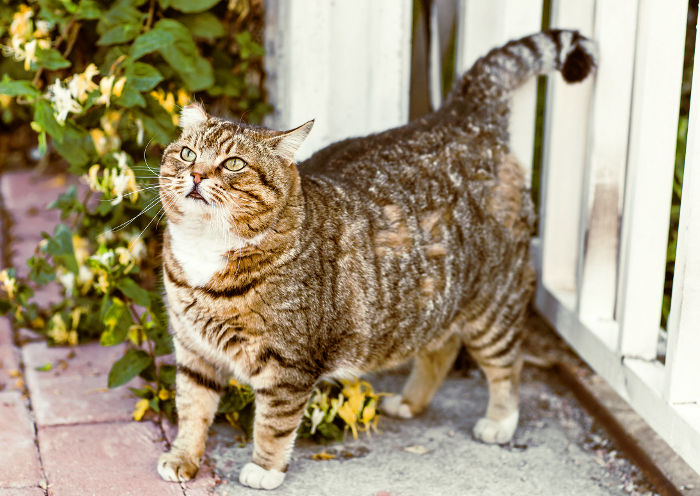 Gato mayor pidiendo comida para gatos senior