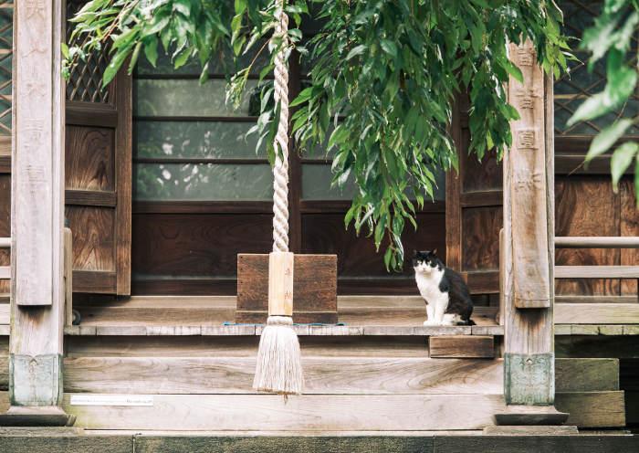Gato que vive en un pequeño templo en Japón