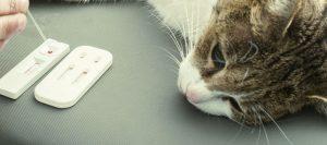 gato con diabtes que necesita un pienso para gatos diabéticos