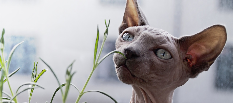 Gato comiendo una planta que es tóxica