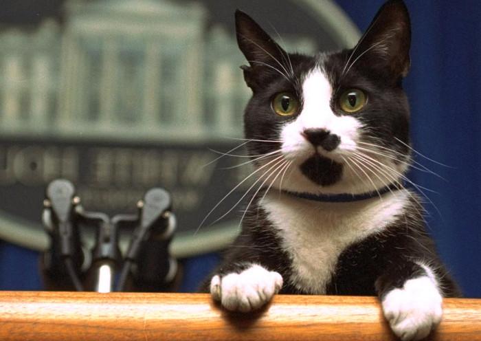 Socks es el gato de Bill y Hillary Clinton